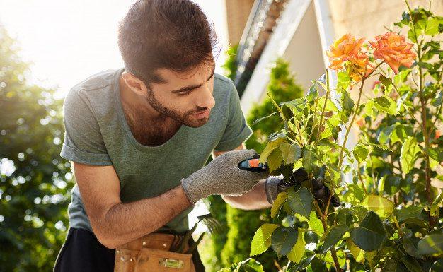 Har du brug for haveservice til din virksomhed?
