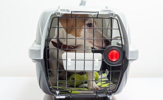 Sikre hundebure til bilen gør det lettere at tage på ture med hunden